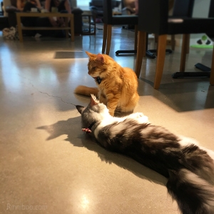 ygritte and alasan cat café manchester review rachael yeung rinniboo visit launch opening food food blogger blog fblogger lblogger lifestyle caturday