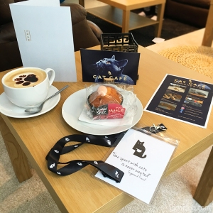 cat café manchester review rachael yeung rinniboo visit launch opening food food blogger blog fblogger lblogger lifestyle caturday