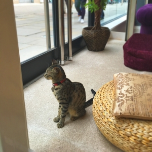 keira or snowy cat café manchester review rachael yeung rinniboo visit launch opening food food blogger blog fblogger lblogger lifestyle caturday