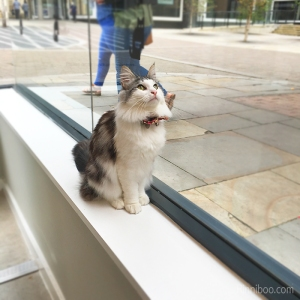Ygritte birdwatching cat café manchester review rachael yeung rinniboo visit launch opening food food blogger blog fblogger lblogger lifestyle caturday